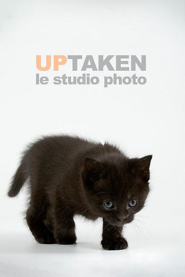 chaton-visite-studio.jpg